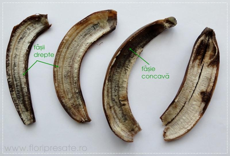 FloriPresate-banana2
